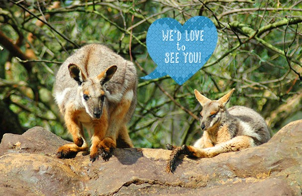 Featherdale wildlife park discount coupons 2019